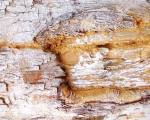 Wood Bark Texture 22