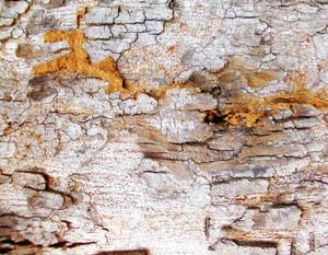Wood Bark Texture 23