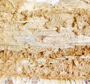 Wood Bark Texture 27