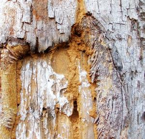Wood Bark Texture 28