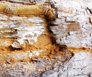 Wood Bark Texture 30