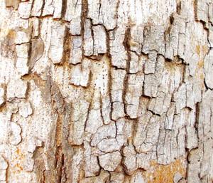 Wood Bark Texture 31