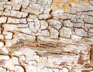 Wood Bark Texture 32