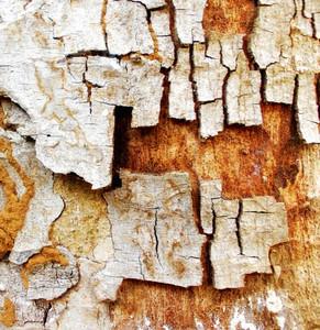 Wood Bark Texture 33