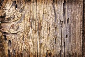 Wood Bark Texture 3