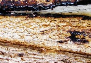 Wood Bark Texture 40