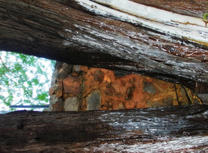 Wood Bark Texture 43