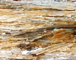 Wood Bark Texture 46