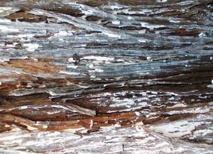Wood Bark Texture 48