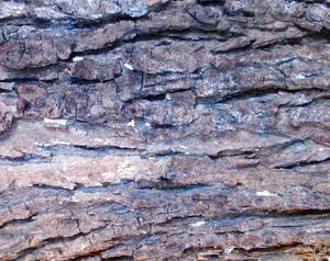 Wood Bark Texture 49