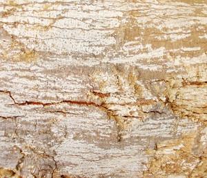 Wood Bark Texture 50