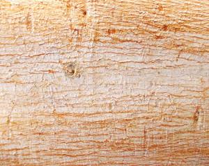 Wood Bark Texture 51