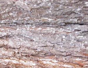 Wood Bark Texture 52