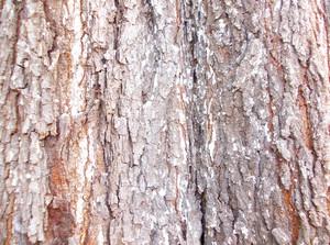 Wood Bark Texture 53