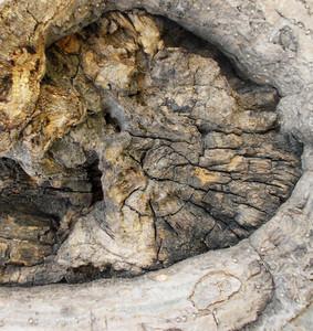 Wood Bark Texture 54