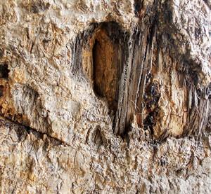 Wood Bark Texture 56
