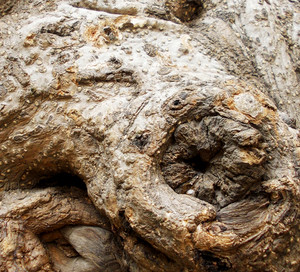 Wood Bark Texture 58
