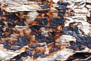 Wood Bark Texture 5