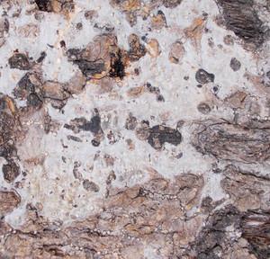 Wood Bark Texture 60