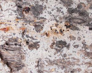 Wood Bark Texture 61