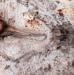Wood Bark Texture 62