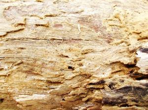 Wood Bark Texture 66