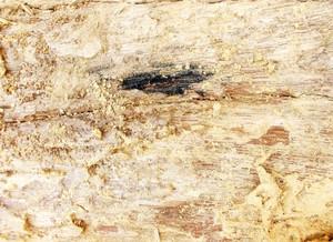 Wood Bark Texture 67