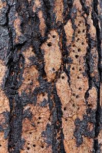 Wood Bark Texture 8