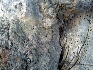 Wood Gnarled 2 Texture