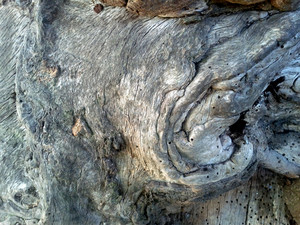 Wood Gnarled 4 Texture