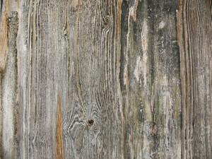 Wood Grain 13 Texture
