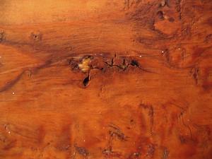 Wood Grain 19 Texture