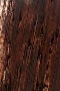 Wood Grain 28 Texture