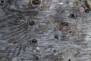 Wood Grain 34 Texture