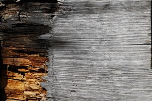 Wood Grain 42 Texture