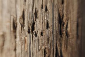 Wood Grain 47 Texture