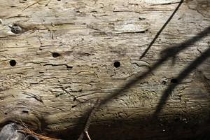 Wood Grain 56 Texture