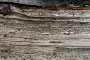 Wood Grain 57 Texture