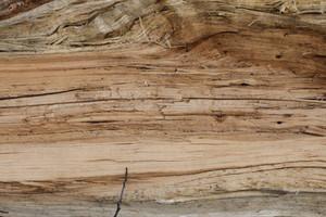 Wood Grain 59 Texture