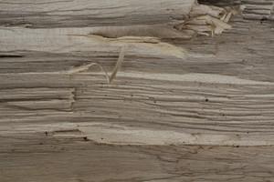 Wood Grain 60 Texture