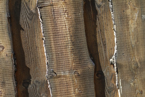 Wood Grain 62 Texture