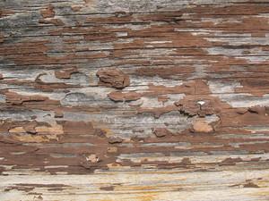 Wood Grain 71 Texture