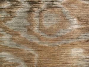 Wood Grain 72 Texture