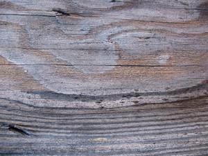 Wood Grain 74 Texture
