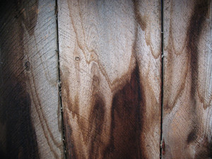 Wood Grunge 23 Texture