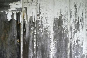 Wood Grunge 38 Texture