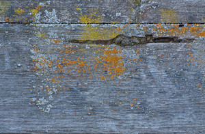Wood Grunge Horizontal