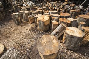 Wood log prepare to industry