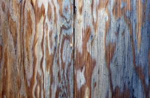 Wood Planks 34