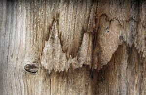 Wood Planks 65